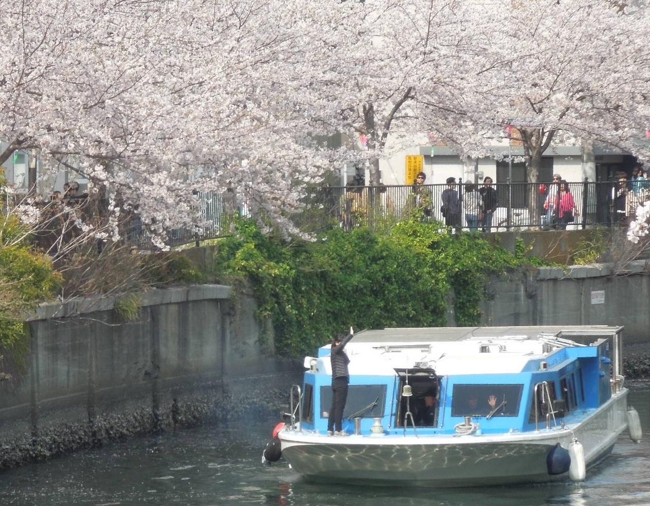 横浜花見クルーズ