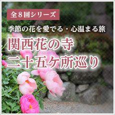 [和歌山発]日帰りバスツアー◆季節の花を...の写真