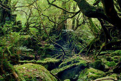 ~一面苔の世界・もののけ姫の森~