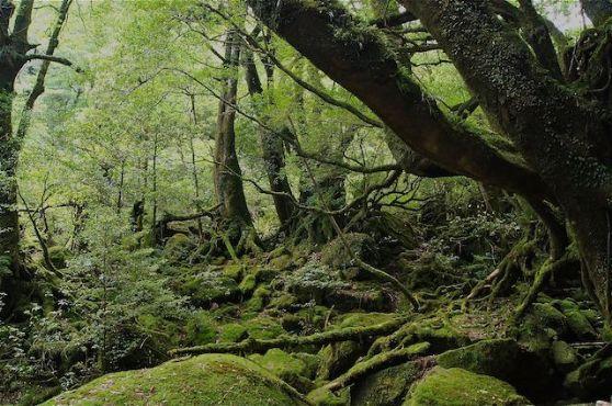 yakushima trekking