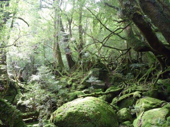 屋久島もののけの森&太鼓岩「白谷雲水峡ツアー」