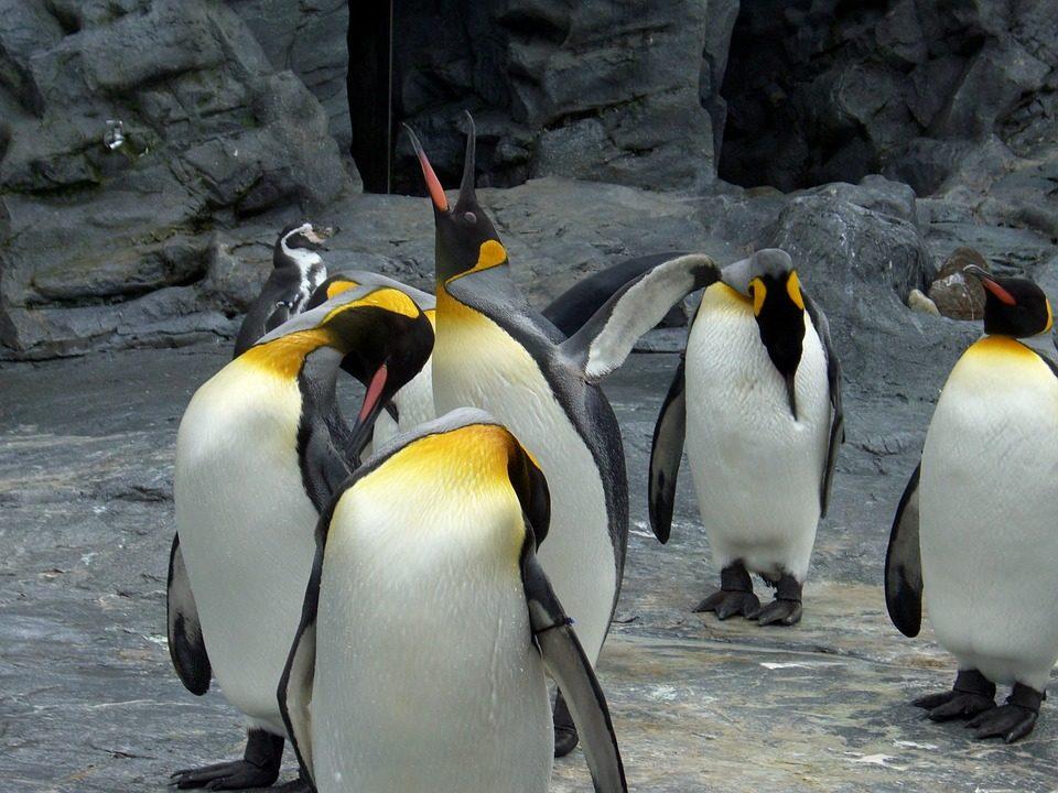 人気スポットを効率よくめぐる 旭山動物園3時間滞在と青い池・白ひげの滝・ファーム富田