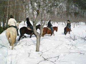 ワイルドな乗馬体験80分RIDE<基本レッスン&保安官とパトロール>