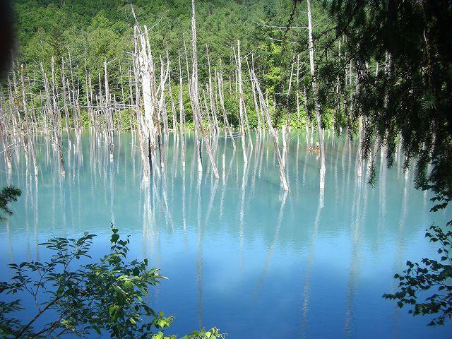 人気観光地を巡るファーム富田・四季彩の丘・青い池コース