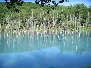 神秘的な青い池を見に行こう!