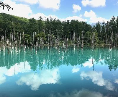 四季彩の丘と青い池・美瑛コース