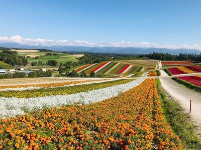 旭山動物園と青い池・ファーム富田・四季彩の丘