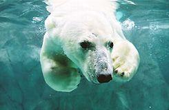 旭山動物園とライトアップ青い池・白ひげの滝、道の駅びえい「白金ビルケ」にも立ち寄り!