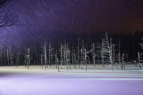 冬スペシャル!!人気の旭山動物園とライトアップの青い池