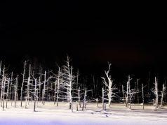 旭山動物園とライトアップ青い池・冬景色の美瑛丘めぐり