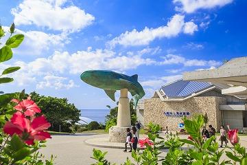 定期観光Bコース 美ら海水族館と今帰仁城跡