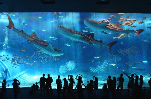 ホエールウォッチング+沖縄美ら海水族館入場券