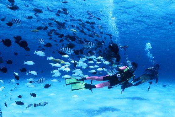 [体験ダイビング] 美ら海水族館から10分!橋で繋がる[瀬底島]で体験ダイビング♪