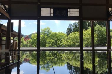 宝徳寺「春の床もみじ」と芝桜の絨毯