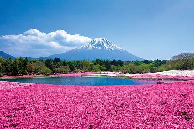 ピンクの絨毯「富士芝桜まつり」&いやしの里根場