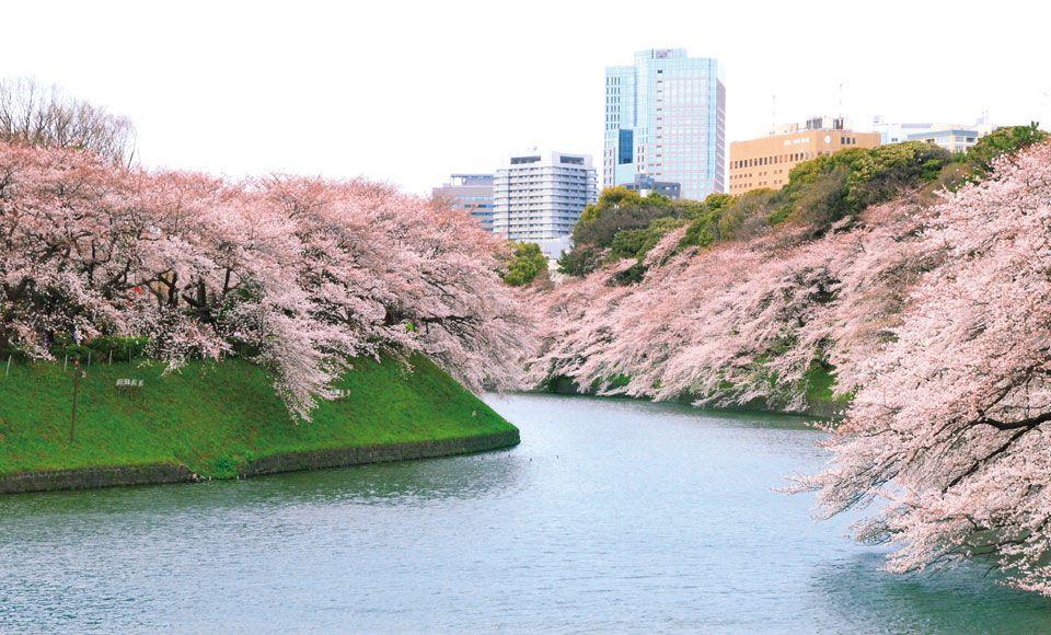 東京桜ツアー