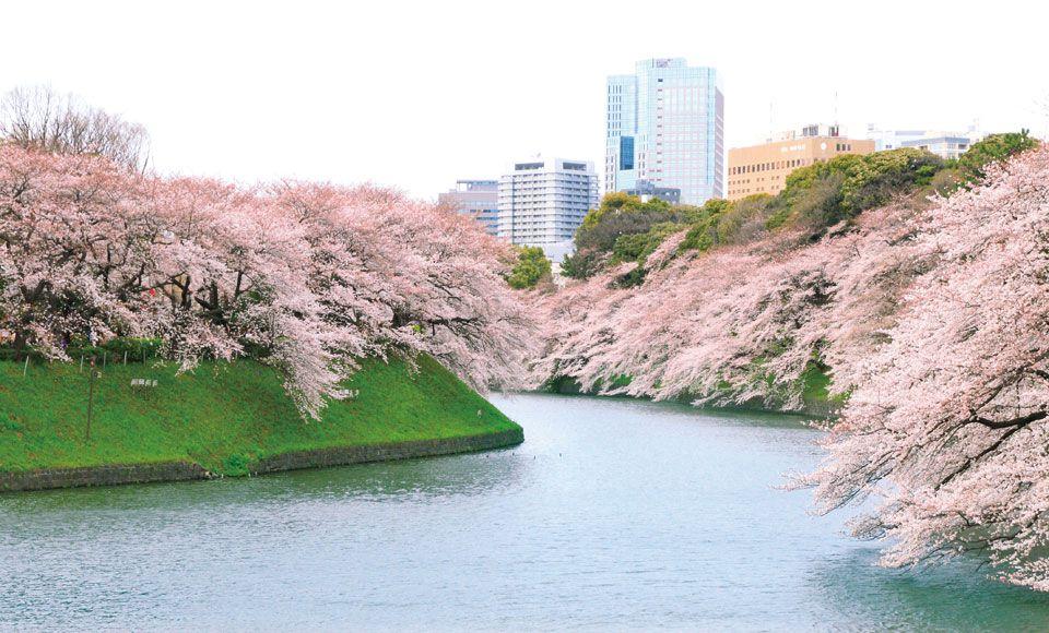 【A422】東京さくら半日ドライブ