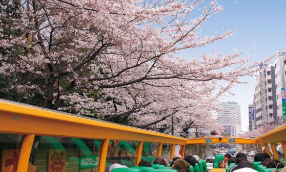 [2階建てオープンバス] 東京さくら回廊