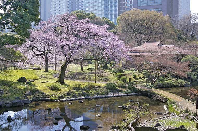 【A436】≪東京桜紀行≫桜の名所飛鳥山公園としだれ桜の名園めぐり