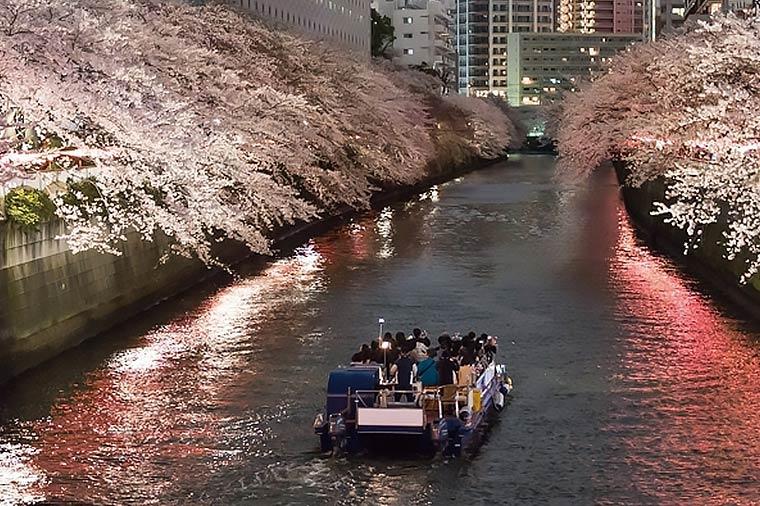 【B239】目黒川夜桜クルーズと世界のバイキング