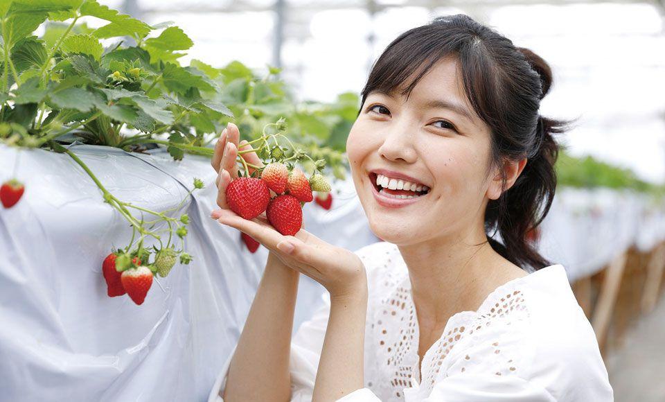 【H507】ピンクの絨毯富士芝桜まつりといちご狩り食べ放題