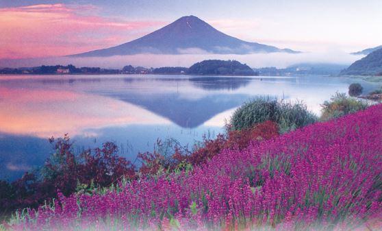 【H515】河口湖ハーブフェスティバルと桃狩り&夏でも溶けない氷の世界