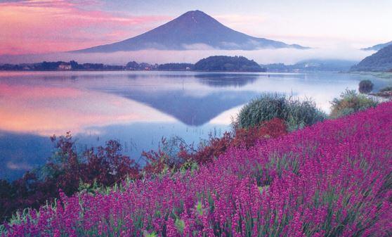 【H549】山梨さくらんぼ狩りとホテルマウント富士絶景フレンチ