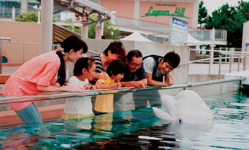 東京発・よこすか開国祭 開国花火大会と横浜・八景島シーパラダイス