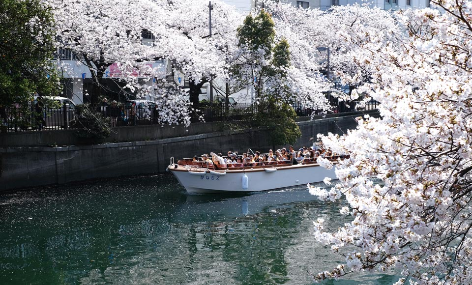 【R834】横浜春の花めぐり(ガーデンネックレス横浜と大岡川お花見クルーズ)