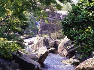 【京都発・長島温泉】ナガシマ入園&湯あみ...の写真