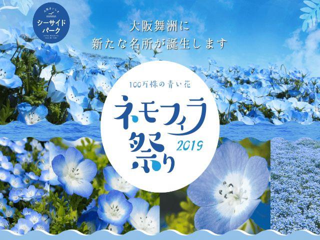 100万株の青い花「ネモフィラ」祭り!大...の写真