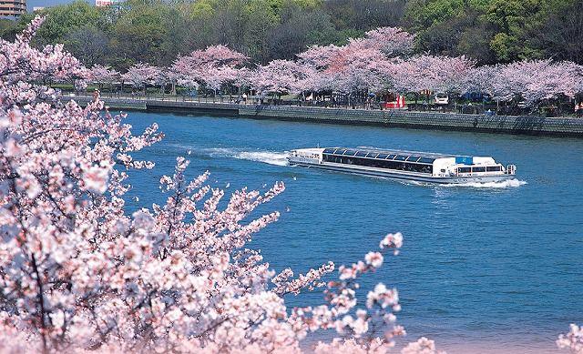 大阪桜ツアー