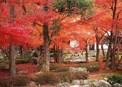 紅葉のしょうざんリゾート京都日本庭園と京料理の昼食・紅葉の名殺常照寺・ 光悦寺を訪ねる