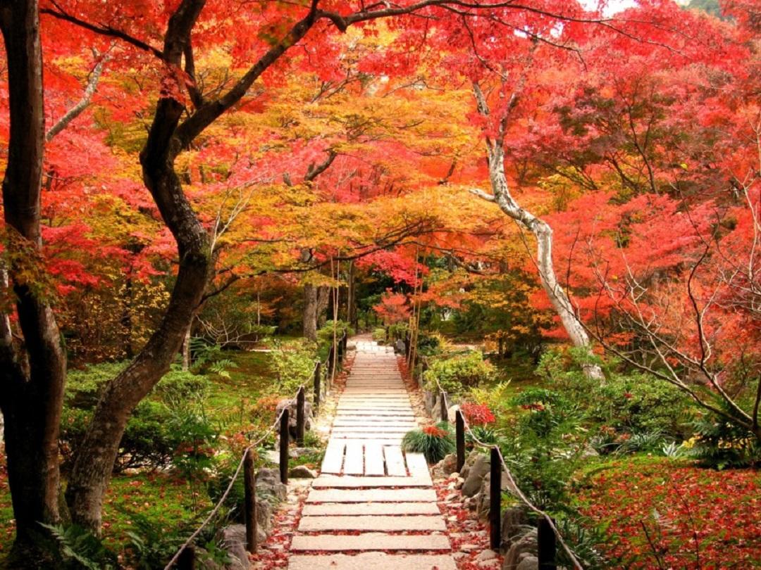 <I>~京都もみじ紀行~高雄散策と嵯峨野の紅葉名所めぐり