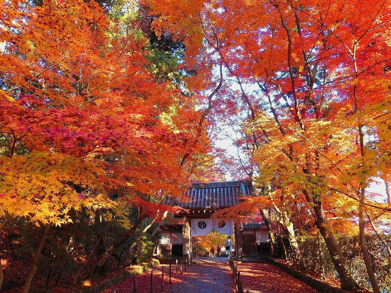 <JS>~京都もみじ紀行~一休寺・光明寺と世界遺産「宇治上神社」