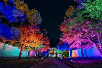 <KM>ライトアップ 京の紅葉 妙顕寺と妙覺寺