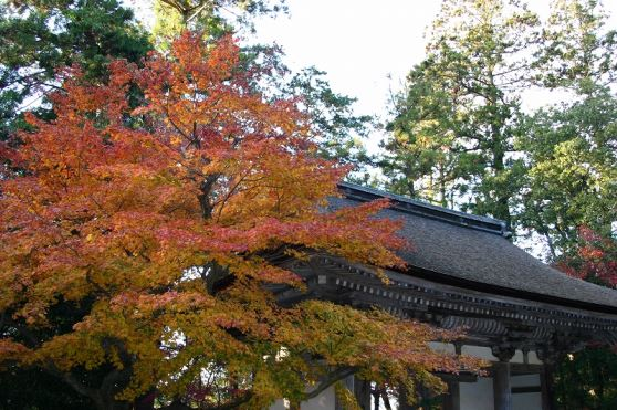 <OM>永源寺と湖東三山めぐり
