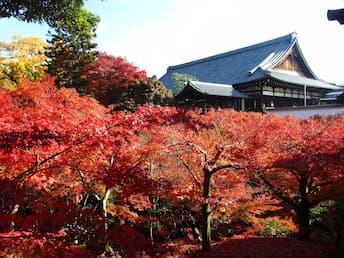 <T>~京都もみじ紀行~ ランキング上位をおさえよう!天龍寺・嵐山・東福寺の紅葉