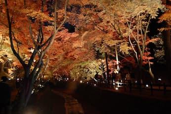 <NY>ライトアップ 京の紅葉 知恩院と東寺の夜紅葉