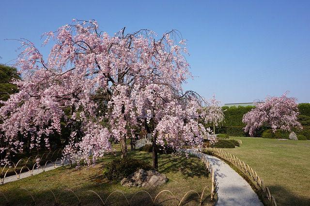 <U>いっぷく亭 たけのこ料理と春の花・青もみじめぐり
