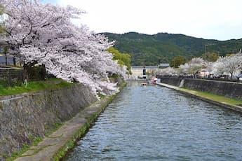 <W3>スカイバス京都 桜満喫ドライブ