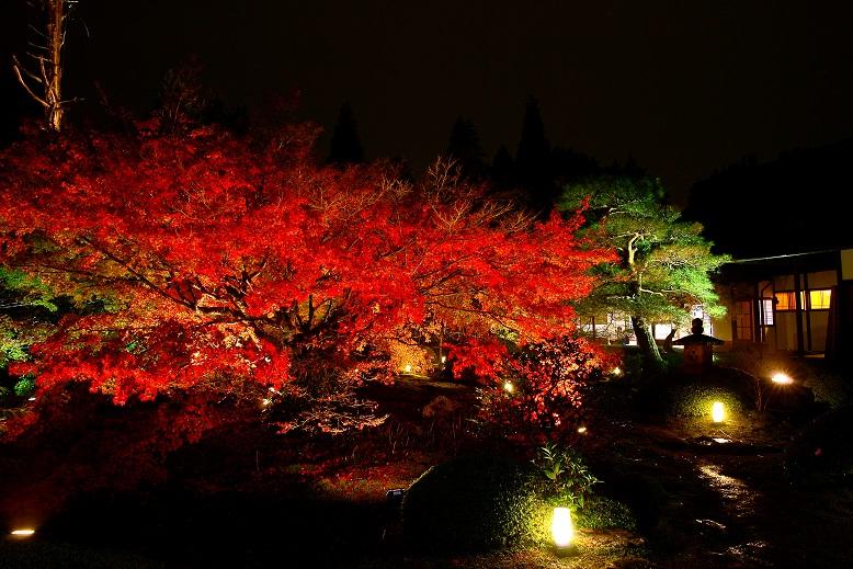 <XA>ライトアップ 京の紅葉 灯り×お庭&お抹茶×静心(しずごころ)