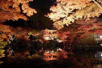 ライトアップ京の紅葉 醍醐寺と隨心院
