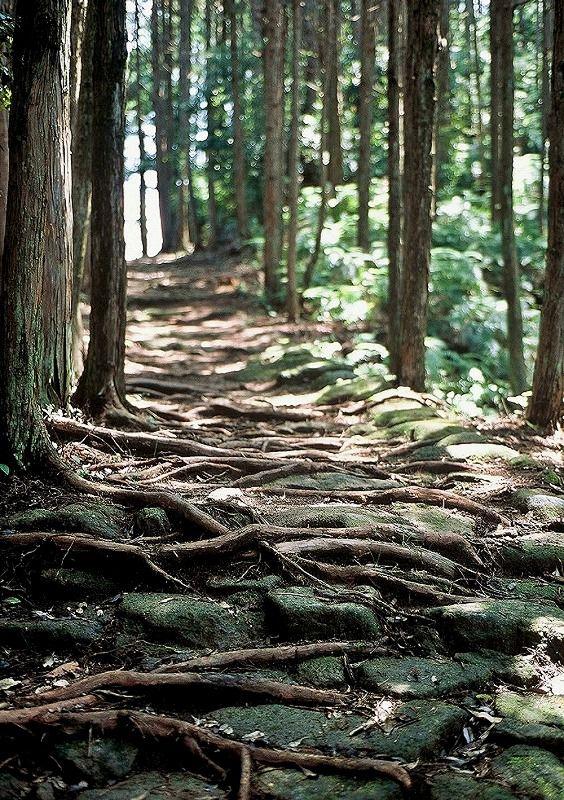 世界遺産『熊野古道 伊勢路』タクシーライ...の写真