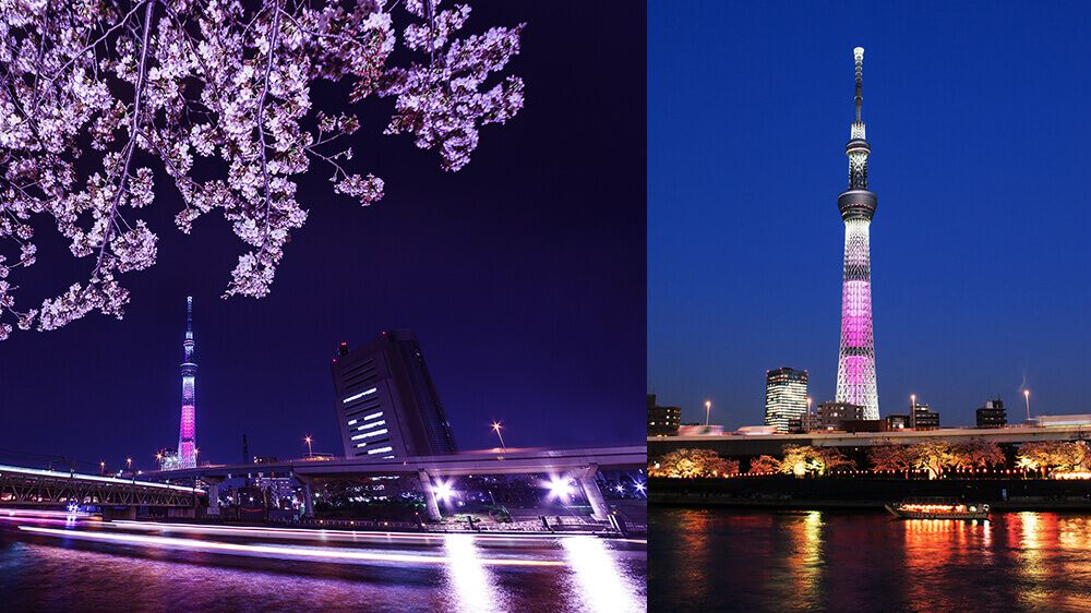 夜桜船★ほろよいセット(乗船料&おつまみ&ワンドリンク)