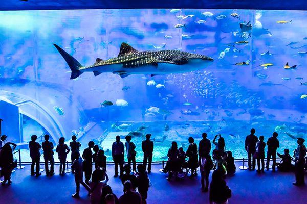 根強い人気!「美ら海水族館」立寄りが入っ...の写真