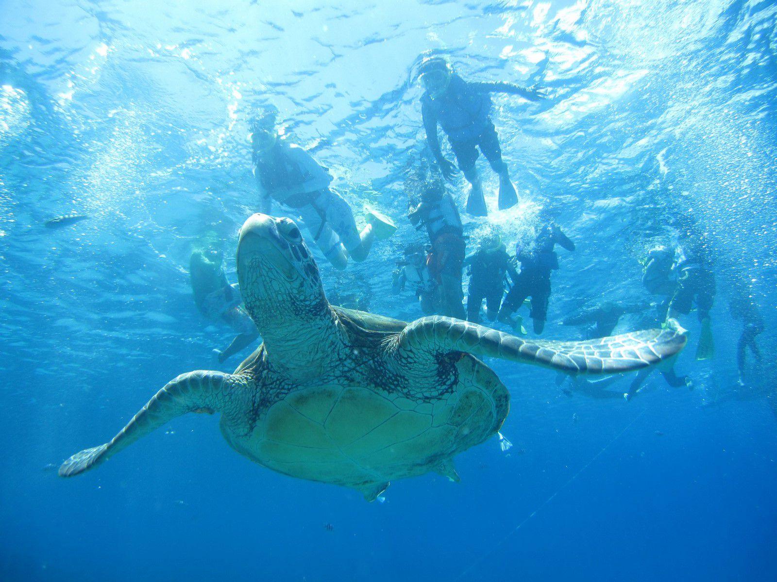 ケラマ諸島 3つのポイントを巡る日帰りツア- スノ-ケルコ-ス