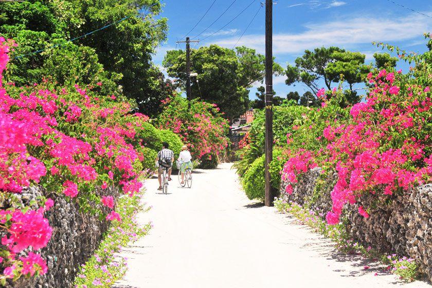 [人気の竹富島へ行こう!]竹富島レンタサ...の写真