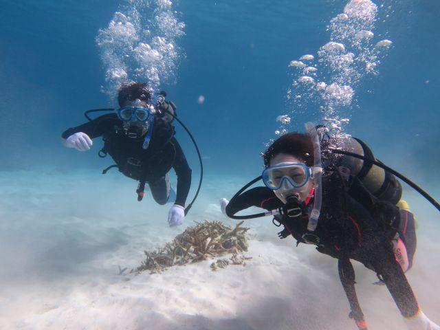 石垣島体験ダイビング人気プラン