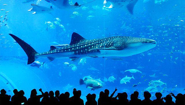 沖縄美ら海水族館と古宇利島・万座毛・ナゴ...の写真